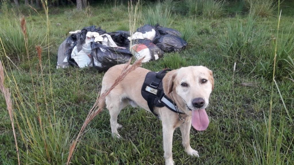 Con perros especializados, en dos operativos la Prefectura y la Gendarmería secuestraron más de 200 kilos de marihuana y detuvieron a varias personas