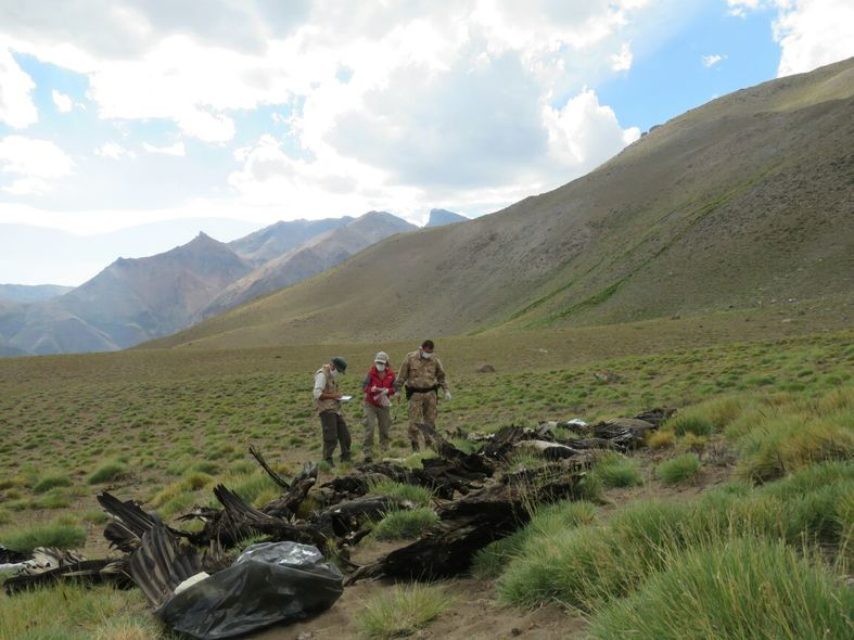 Ciencia y políticas públicas para conservar al Cóndor Andino