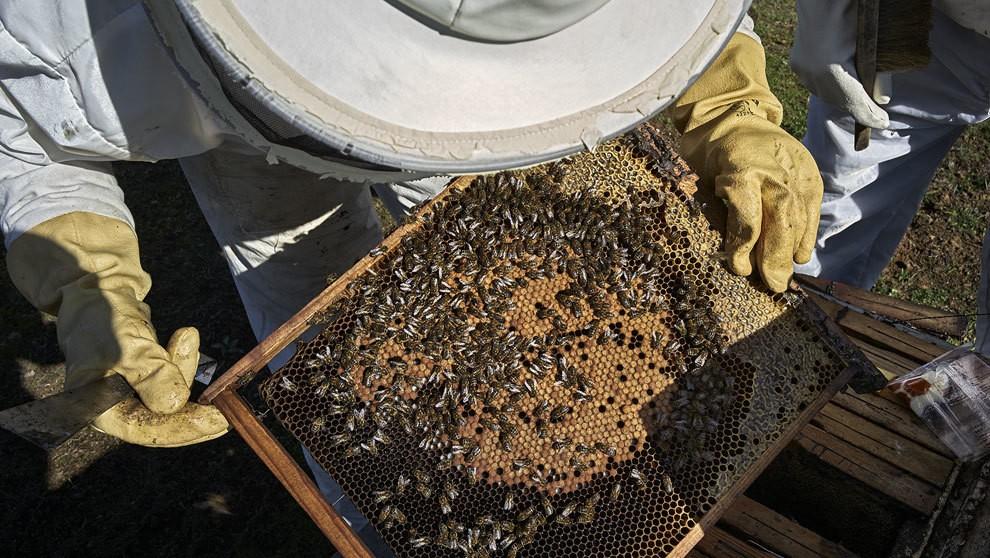 Del pueblo de la miel para todo el país