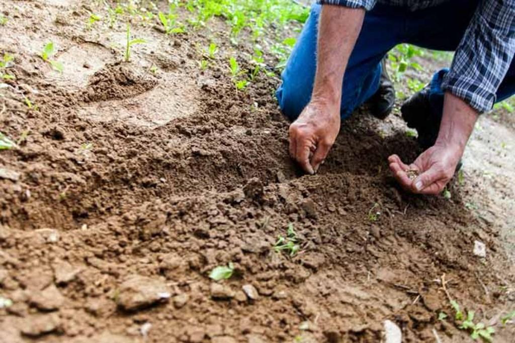 Efeméride nacional del día 7 de Julio: Día de la conservación del suelo