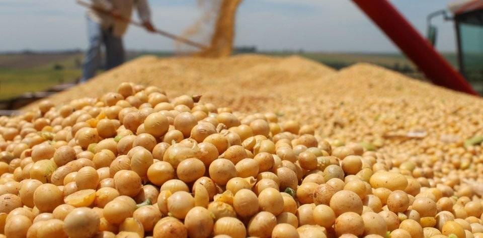 Entre enero y junio, la comercialización de granos creció hasta un 59% respecto al 2020