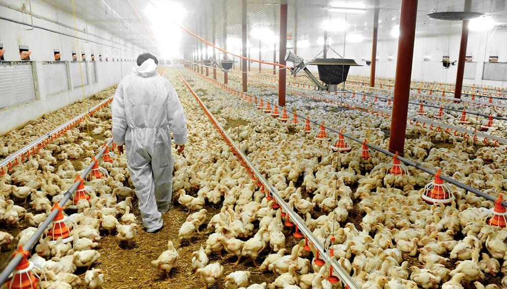Matías Kulfas lanzó créditos por $2.000M para fortalecer la competitividad de la cadena avícola