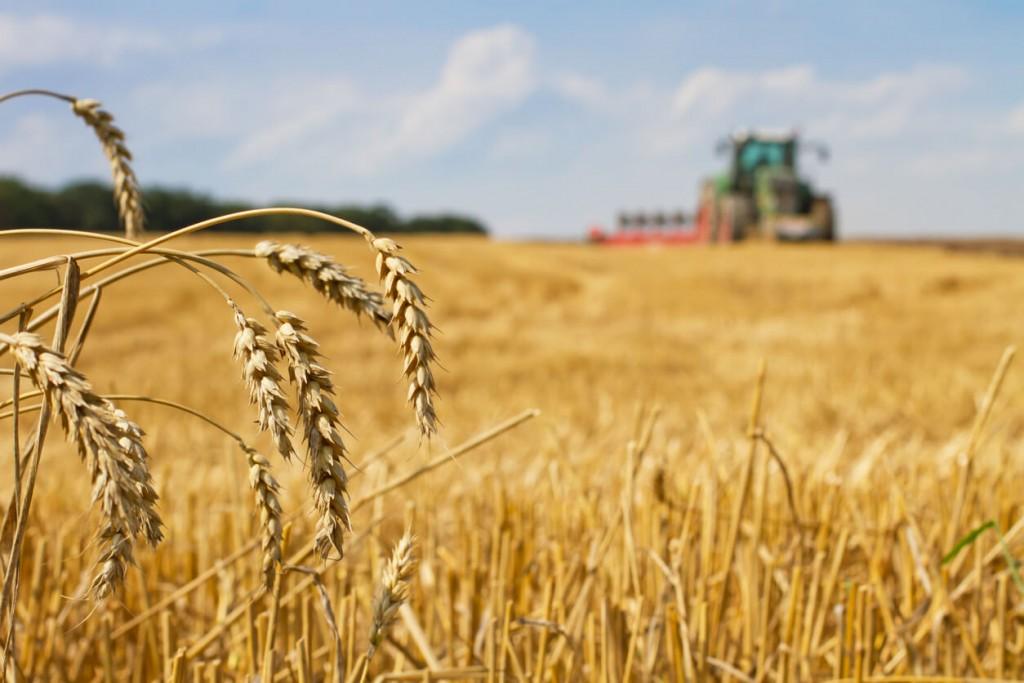 La campaña fina 21/22 tendrá una siembra récord de 8.25 millones de hectáreas