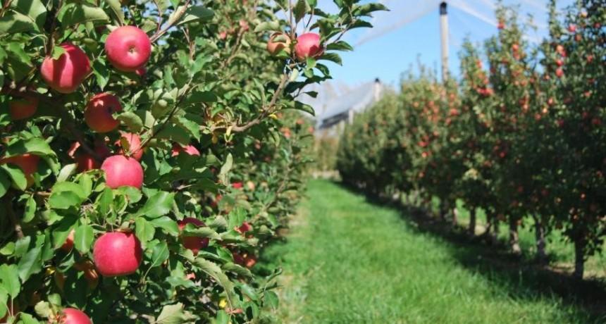 Acuerdo de precios para la provisión de manzanas en el Mercado Central