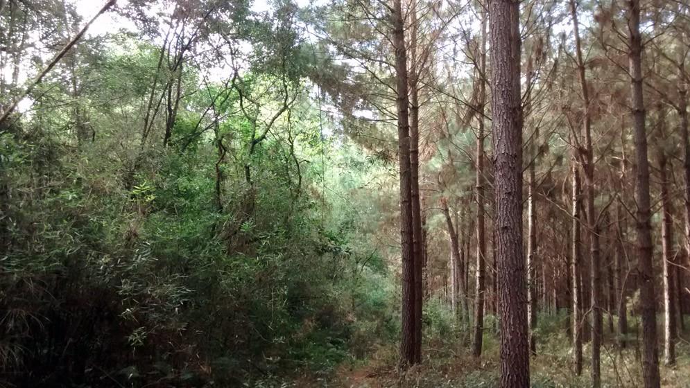 Desarrollarán un plan de conservación de biodiversidad en bosques cultivados