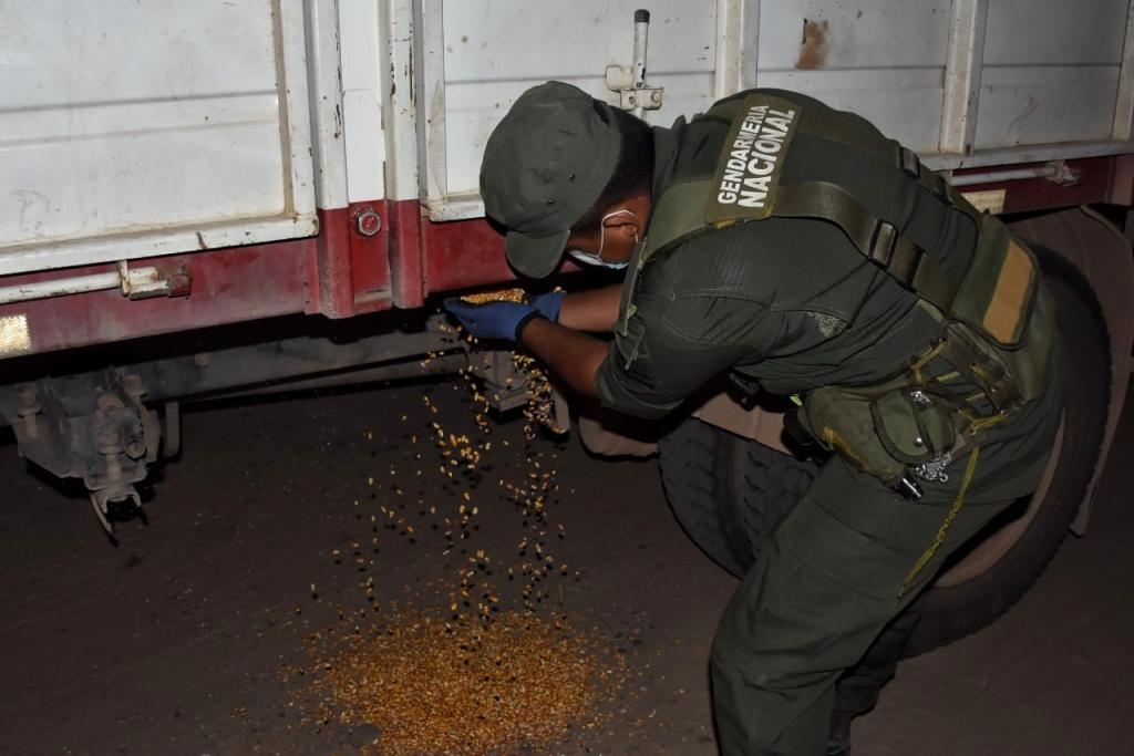 Contrabando: Gendarmería  incautó más de 60 toneladas de maíz