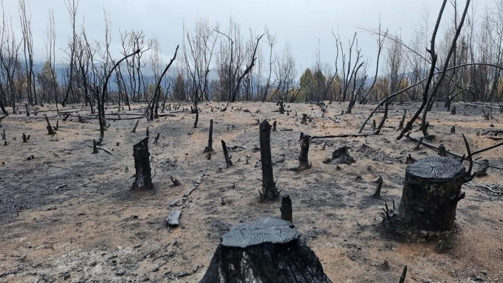 Se declaró la emergencia agropecuaria en Chubut