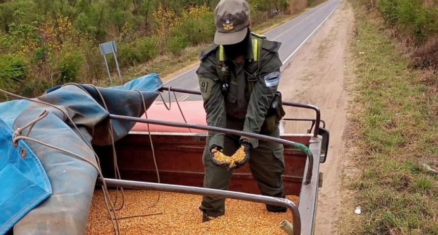 Gendarmería neutralizó el tráfico ilegal de 180 toneladas de soja, maíz y lentejas