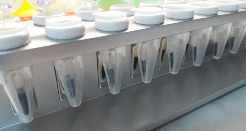 producirán un kit de extracción rápido de ARN para el diagnostico de covid-19 con sello bonaerense