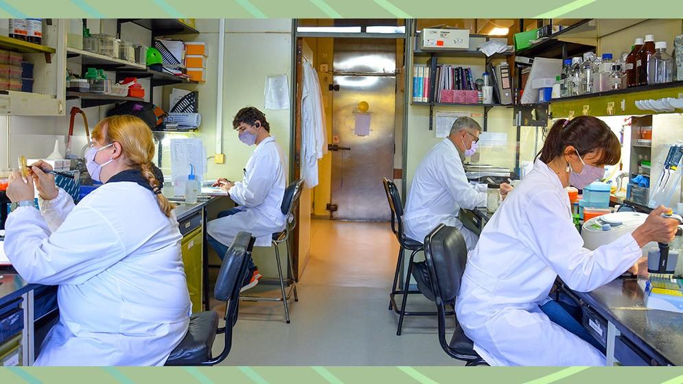 Estudios preclínicos muestran que una vacuna argentina en desarrollo contra el SARS-CoV-2 neutraliza distintas variantes del virus